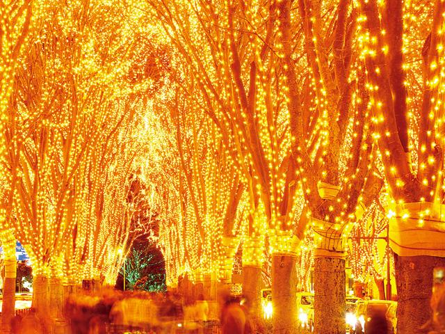 仙台の冬の風物詩【SENDAI光のページェント】