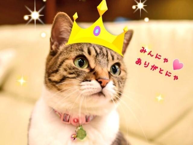 看板猫ランキング全国第1位受賞!