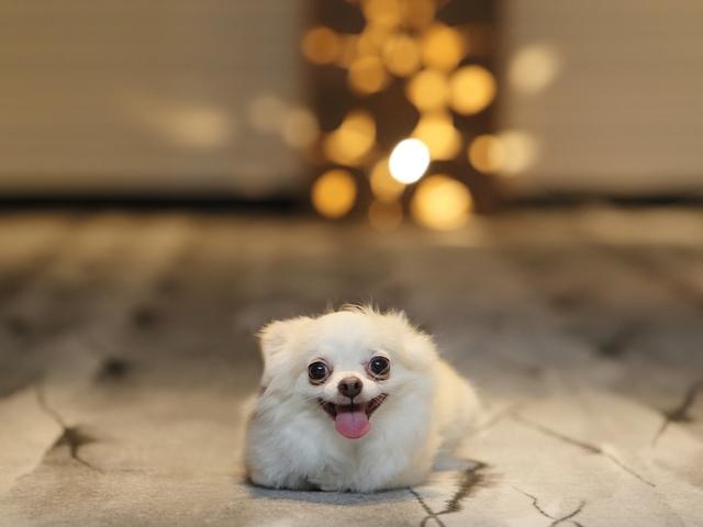 楽しい休日を愛犬とごゆっくりお寛ぎ下さいませ。