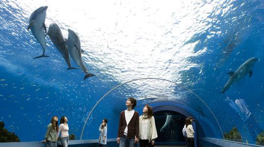 【大人気!】横浜八景島シーパラダイス1DAYペアチケット付プラン♪♪<朝食付><ホテルニューヨコスカ>
