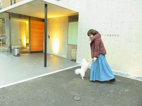 大人の自由なひとり旅with DOGS【お部屋食・客室かけ流し温泉の贅】