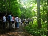 【ポポラ】緑あふれるブナ林の散策