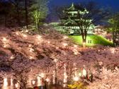 日本三大夜桜の一つ・高田公園の夜桜観賞バスツアー付きプラン!