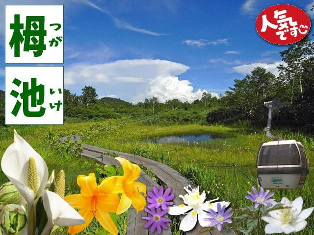 花を楽しみながらの湿原散策・栂池自然園のリフト+入園券付プラン
