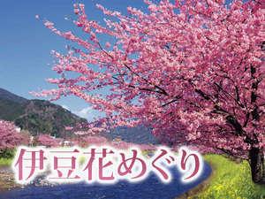 12月~4月までいつでも花巡り&祭り開催中です。下田水仙~熱海梅園~河津の桜~伊東のつばきまで