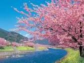 ♪お客様にご案内です♪ 2月10日より3月10日まで南伊豆にて、みなみのさくらと菜のはなまつりが 開催致します、青野川沿いに1000本の河津桜と菜の花を植えてありますので ピンクとイエローの色のコントラストを是非ご覧下さいませ。 又、同時に河津さくらまつりも開催致しておりますので、みなみの桜と河津の桜の開催地 の中間点の下田に泊まり両方のさくらまつりをご覧下さい。