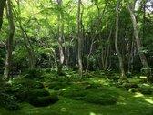 祇王寺は緑色の苔がきれいです。