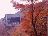 秋の清水寺観光は鉄板ですね♪