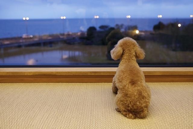 大人の自由なひとり旅 with DOGS ~お部屋食&客室温泉露天風呂でプライベートを贅沢に~