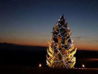 クリスマスツリーガーデン