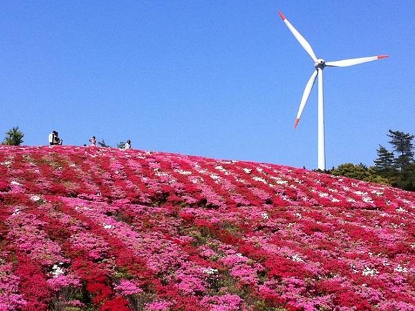 季節先取り★菅無田公園|18,000本のツツジが咲き誇ります<見頃>4月下旬~5月上旬