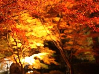 山口県長門市深川湯本にある曹洞宗の寺『大寧寺』山口県三大奇橋の一つ盤石橋があり桜や紅葉の名所です。