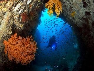 【ダイビング】青海島の海中世界で非日常を体験。