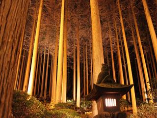 夜間ライトアップされる百年杉庭園