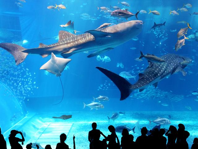 【美ら海水族館】が楽しめる☆連泊で観光拠点にするとお得な♪アクアリウムプラン≪朝食+入場券付≫2泊以上