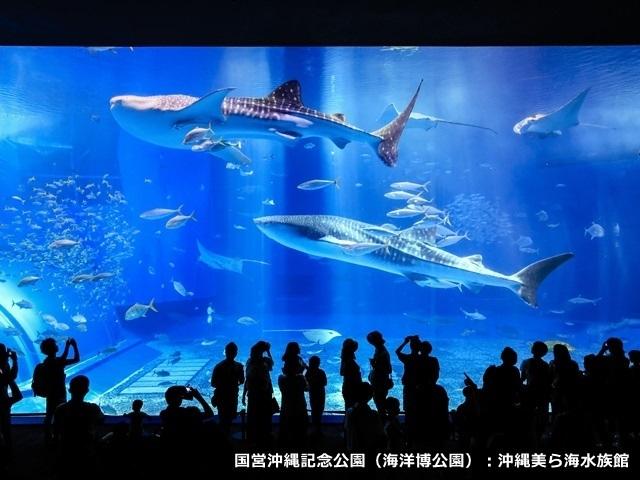 【水族館チケット付】ジンベイザメを見に行こう!美ら海アクアリウムプラン≪朝食付≫