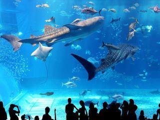 沖縄美ら海水族館 ホテルから車で約5分
